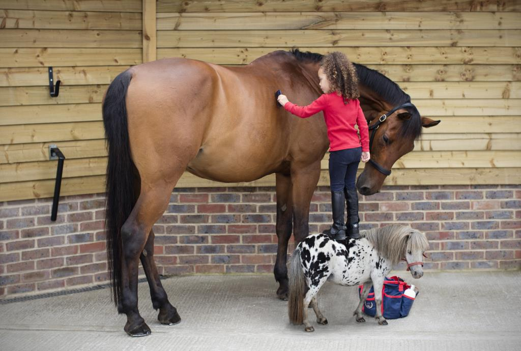 Fun equine family portraits horse portraits