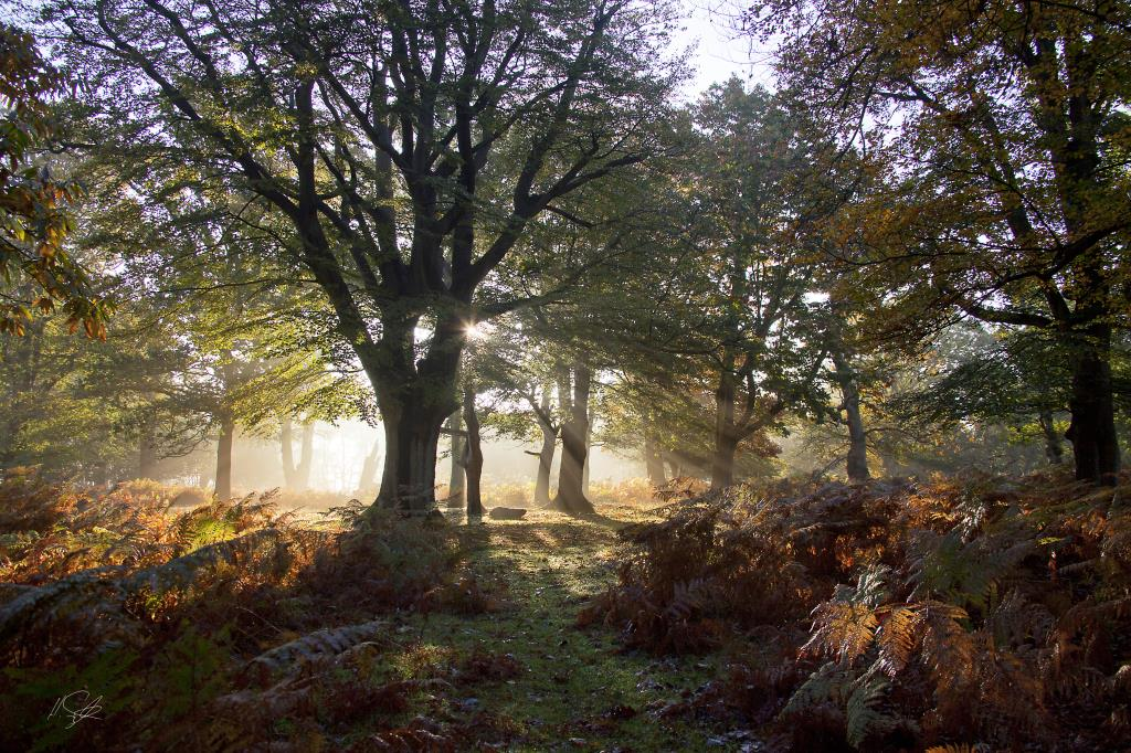 Denny Wood New Forest Hampshire Autumn Mist