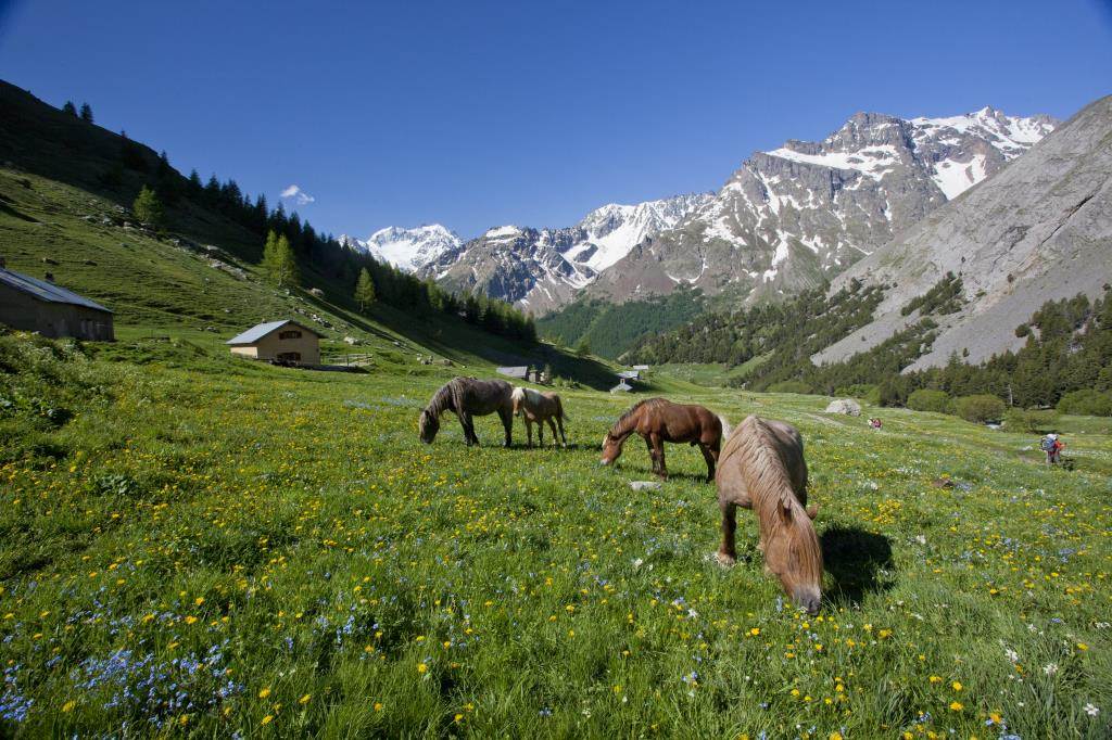 Lanscape Photography Alps horse wild flowers mountain