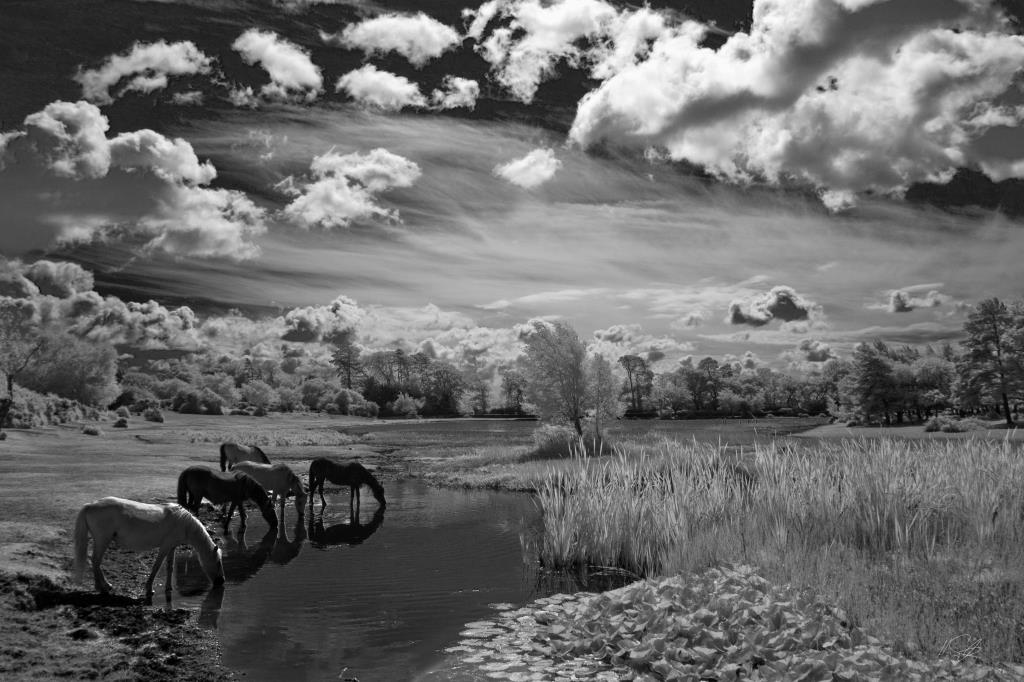 Infrared Landscape photography image of New Forest Ponies at Hatchet Pond near Beaulieu in the National Park